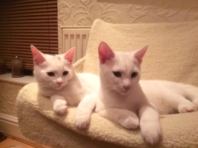 coco and baetrice rehomed